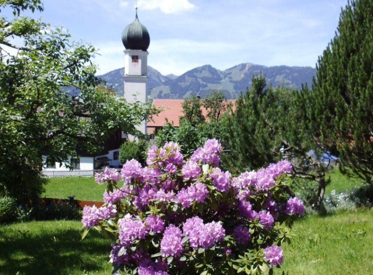 Sommer-Blumen-Rosa